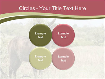 Waterbuck PowerPoint Template - Slide 38