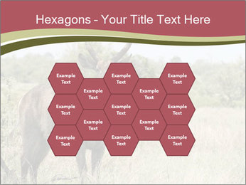 Waterbuck PowerPoint Template - Slide 44