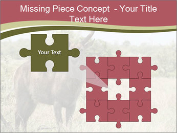 Waterbuck PowerPoint Template - Slide 45