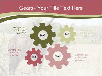 Waterbuck PowerPoint Templates - Slide 47