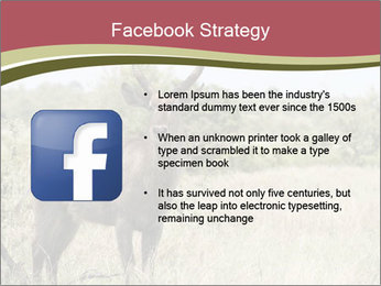 Waterbuck PowerPoint Templates - Slide 6
