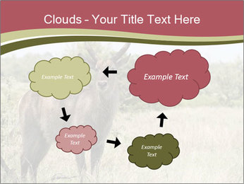 Waterbuck PowerPoint Templates - Slide 72