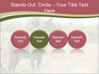 Waterbuck PowerPoint Templates - Slide 76