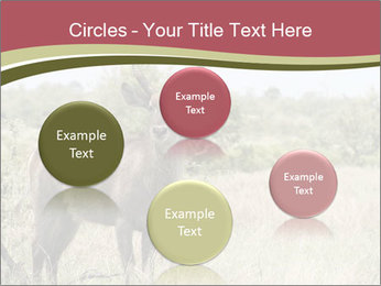 Waterbuck PowerPoint Template - Slide 77