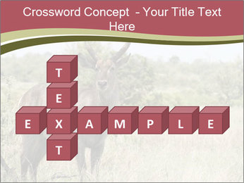 Waterbuck PowerPoint Template - Slide 82