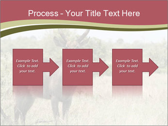 Waterbuck PowerPoint Template - Slide 88