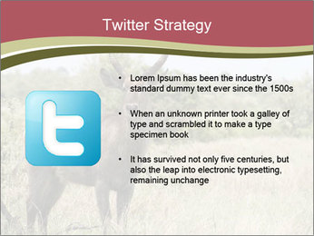 Waterbuck PowerPoint Template - Slide 9
