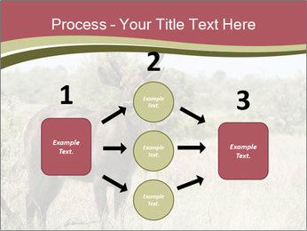 Waterbuck PowerPoint Template - Slide 92