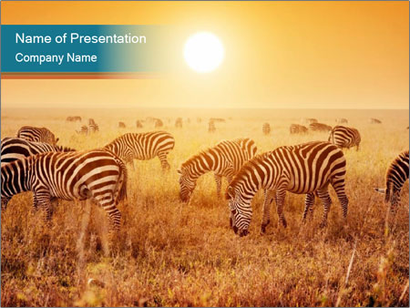 Zebras herd PowerPoint Templates