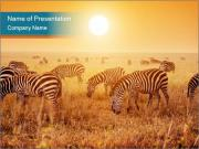 Zebras herd PowerPoint Template