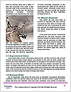 0000087613 Word Templates - Page 4
