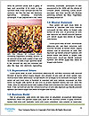 0000087620 Word Template - Page 4