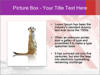 Meerkat hiding PowerPoint Templates - Slide 13
