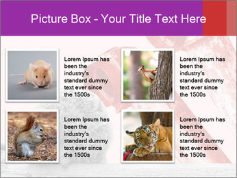 Meerkat hiding PowerPoint Templates - Slide 14