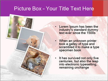 Meerkat hiding PowerPoint Templates - Slide 17
