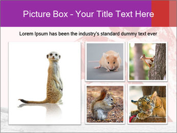 Meerkat hiding PowerPoint Templates - Slide 19