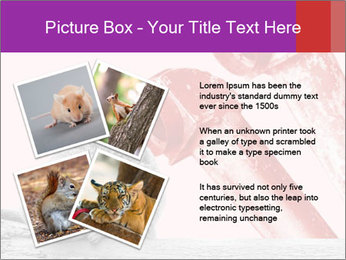 Meerkat hiding PowerPoint Templates - Slide 23