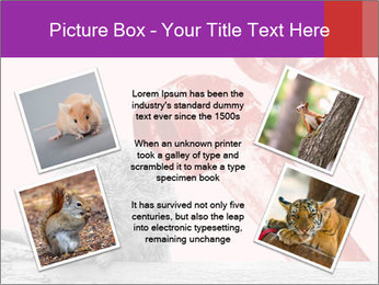 Meerkat hiding PowerPoint Templates - Slide 24