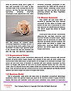 0000087649 Word Templates - Page 4