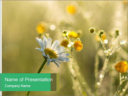Early morning PowerPoint Templates