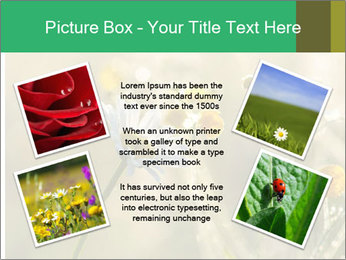 Early morning PowerPoint Templates - Slide 24