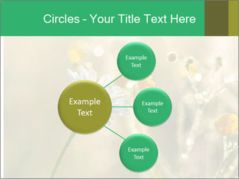 Early morning PowerPoint Templates - Slide 79