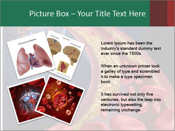 Human artery PowerPoint Template - Slide 23