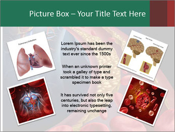 Human artery PowerPoint Template - Slide 24