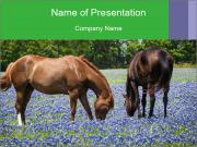 Two horses PowerPoint Templates