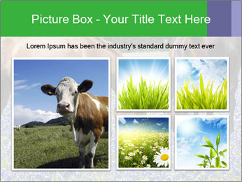 Two horses PowerPoint Template - Slide 19