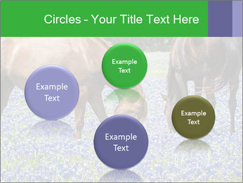 Two horses PowerPoint Template - Slide 77