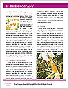 0000087664 Word Template - Page 3
