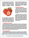 0000087671 Word Templates - Page 4