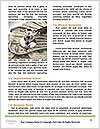 0000087673 Word Templates - Page 4