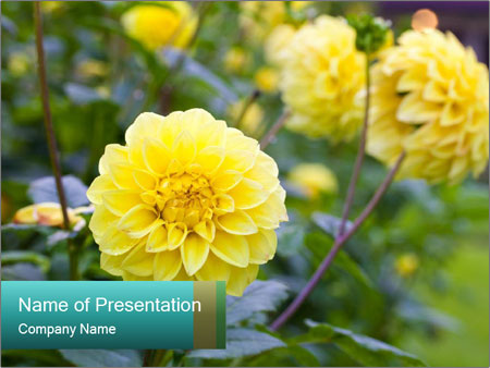Yellow flower PowerPoint Template