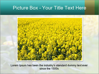 Yellow flower PowerPoint Templates - Slide 16