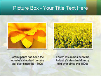 Yellow flower PowerPoint Template - Slide 18