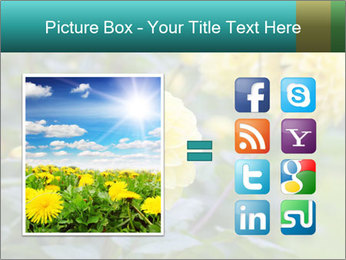 Yellow flower PowerPoint Template - Slide 21