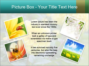 Yellow flower PowerPoint Template - Slide 24