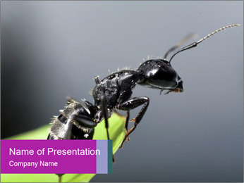 Ant PowerPoint Template - Slide 1