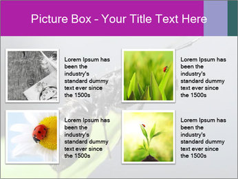 Ant PowerPoint Template - Slide 14