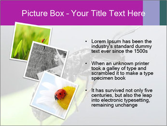 Ant PowerPoint Template - Slide 17