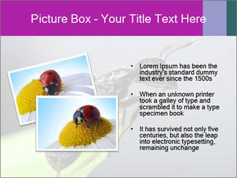 Ant PowerPoint Template - Slide 20