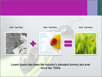 Ant PowerPoint Template - Slide 22