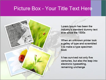 Ant PowerPoint Template - Slide 23