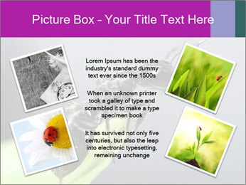 Ant PowerPoint Template - Slide 24