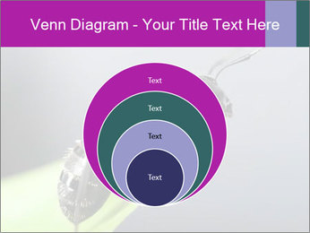 Ant PowerPoint Template - Slide 34