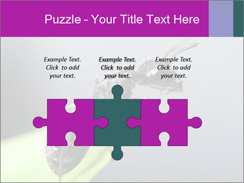 Ant PowerPoint Template - Slide 42