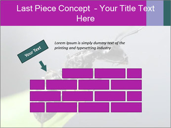 Ant PowerPoint Template - Slide 46