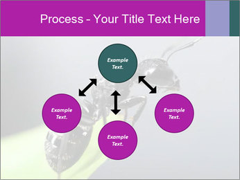 Ant PowerPoint Template - Slide 91